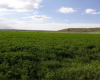 Yerevan, ,Land,For Sale,1031